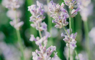 blomst-1-4